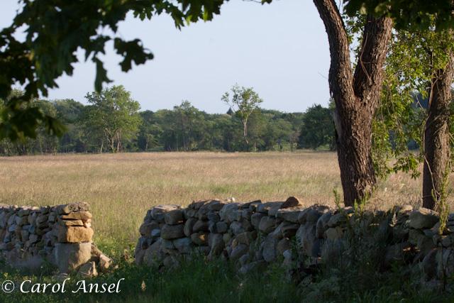 Weeden field & wall Jun12